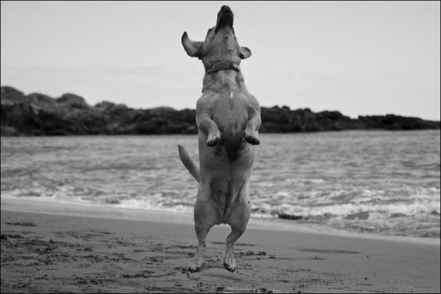 dog_trying